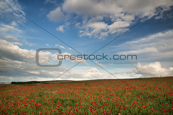Beautiful poppy field landscape during sunset with dramatic sky