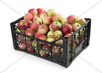 Group of red apples