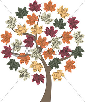 autumn tree maple
