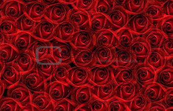 background with many red roses