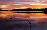 Sunrise Narrabeen Lakes