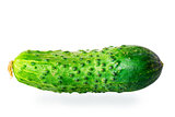 one juicy green cucumber on white background macro