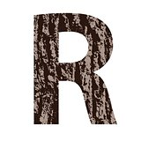 letter R made from oak bark