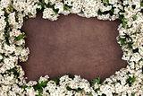 Hawthorn Blossom Flower Frame