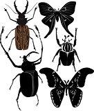 butterflies beetles