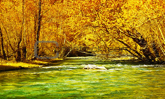 Beautiful autumn forest and river