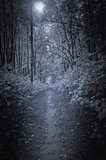 Path in the deep forest at night time.