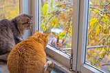 cats watch on the balcony a squirrel