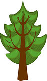 Cartoon conifer Tree. Isolated