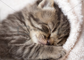 3 weeks sleeping baby kitten