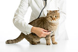 Veterinary doctor with stethoscope and cat isolated on white