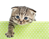 funny cat or kitten in cardboard box isolated