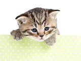 kitten cat in cardboard box isolated