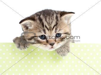 kitten cat in cardboard box isolated