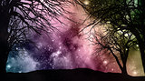 Starfield night sky with tree silhouettes