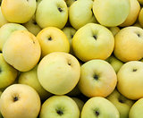 Yellow juicy fresh apples background