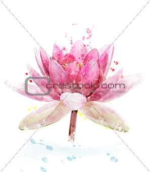 Watercolor Image Of Pink Waterlily Flower