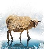 Watercolor Image Of Sheep