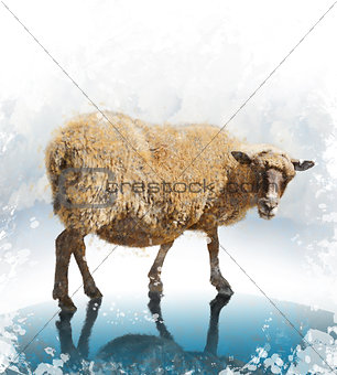Watercolor Image Of Sheep