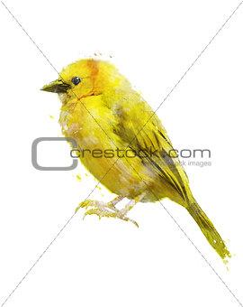 Watercolor Image Of Yellow Bird