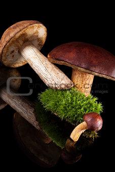 Fresh boletus mushrooms.