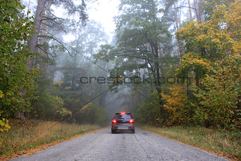 Car on a road in the forest