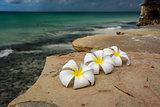 Flowers Zanzibar