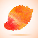 Orange watercolor painted vector elm tree leaf