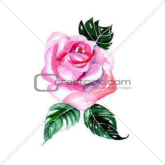 Watercolor flowers - pink rose, vector