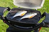 Fresh dorado fish grill cooking