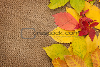 Autumn leaves over burlap texture background