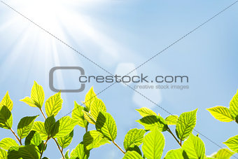 Abstract sunny summer bokeh background with green leaves