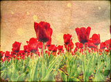 Tulips on Stained Paper