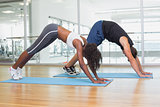 Fit couple in dolphins pose on exercise mats