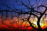 Fig at sunset
