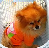 Tiny Dog in a Basket