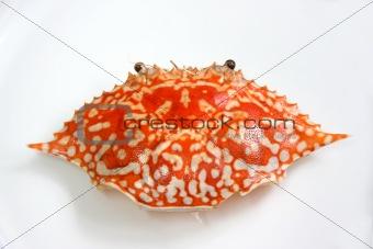 King crab shell