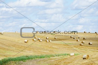 Autumn Agricultural Field