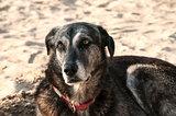 Mongrel dog on sand beach