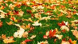 Leafy Lawn