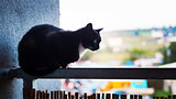 Cat on the balcony