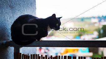 Cat on the balcony