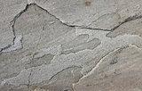 Uneven grey sandstone slab