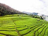 Rice terrace in north of Thailand.