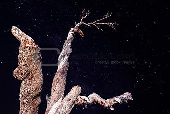 Old tree on starry sky background