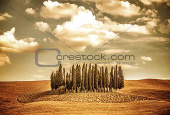 Beautiful autumn vinatge landscape