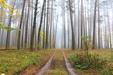 road through foggy forest at autumn