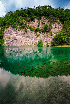 Fish in Turquoise Transparent Water of Plitvice Lakes, National