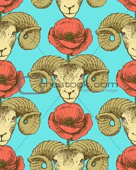 Sketch ram and poppy flower