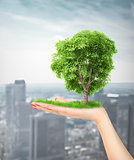 Eco concept. Hand of nature holding a big tree.